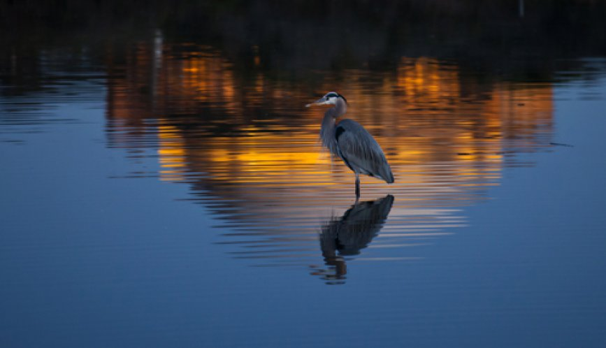 Heron at the POFA